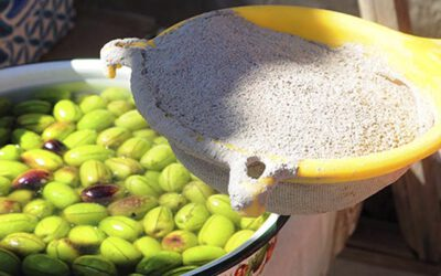 Preparación de aceitunas sevillanas a escala industrial