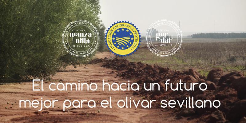 Inscripción en el Consejo Regulador de la IGP Aceituna Manzanilla y Gordal de Sevilla 2020