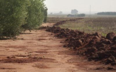 El valor ecológico y cinegético del olivar tradicional