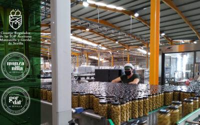 Cerrado el plazo de inscripción de olivares, centros de compra e industrias en el Consejo Regulador de las IGP Aceitunas Manzanila y Gordal de Sevilla para la campaña 2.020 – 2.021.