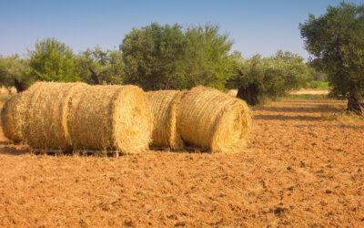 El Acceso a la Tierra en España: problemática y efectos sobre el relevo generacional