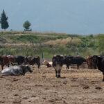 Satisfacción de todo el sector por la concesión de ayudas directas a los ganaderos de reses bravas y toros de lidia en la C. Valenciana