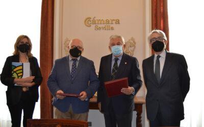 Acuerdo entre la Cámara de Comercio y la IGP de las aceitunas sevillanas para reforzar a sus empresarios asociados.
