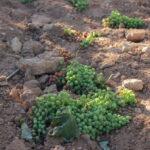 Petición con tiempo: Reclaman al Ministerio y CCAA la puesta en marcha de la cosecha en verde esta campaña