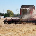 Los precios de los cereales siguen cayendo en España, a contracorriente de unos mercados internacionales con fuertes subidas