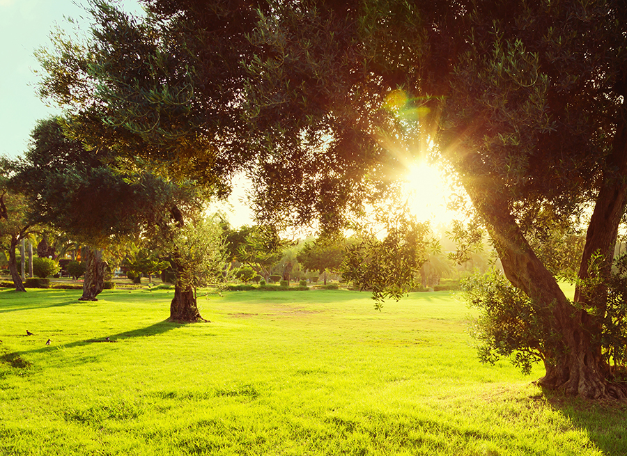 Científicos presentan en Lisboa los últimos avances en protección integrada del olivar