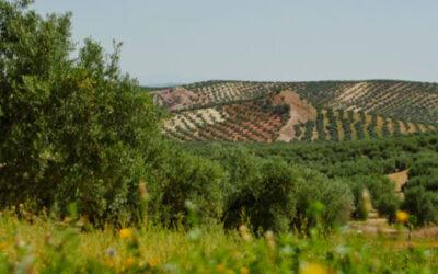 Día Internacional de la Madre Tierra: el olivar como garante de la biodiversidad