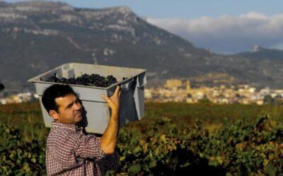 Eurodiputados socialistas y populares se oponen a la división de la DOCa Rioja
