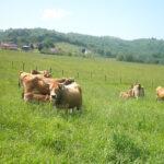 Castilla y León impedirá la entrada del ganado asturiano a sus pastos si no han sido saneado previamente con un margen de 30 días