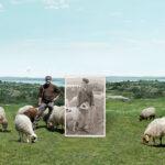 Interovic presenta el Programa Europeo que ayudará a posicionar la sostenibilidad del ovino y caprino ante la sociedad