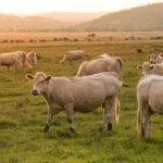 Señalan a los europarlamentarios que votaron a favor de un endurecimiento del uso de antibióticos en animales sólo por ideología