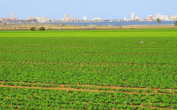 La CE reclama hacer mucho más para reducir la contaminación de las aguas por nitratos de origen agríco