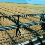 Se prevé una menor cosecha de arroz arrastrada por Andalucía y mirando a ver si algún ecoesquema se adapta a este cultivo